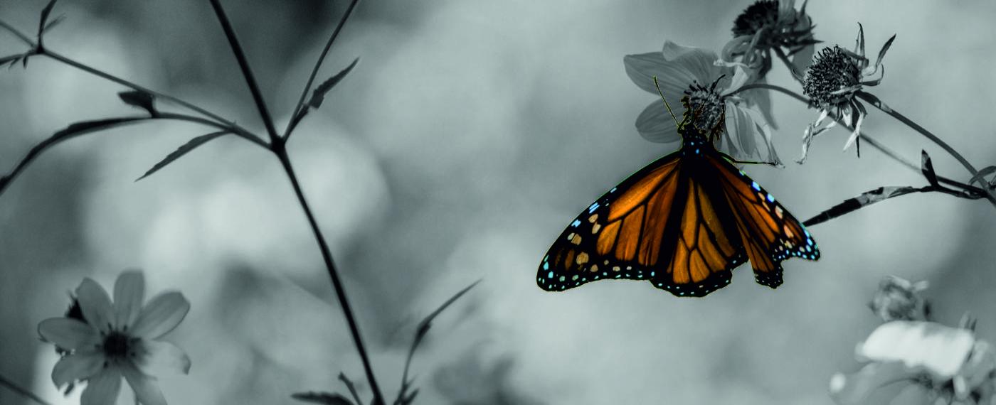 butterfly-garden-1400x570