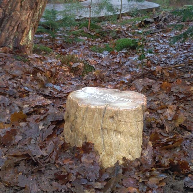 Duuzaam versteend hout als grafsteen op natuur begraafplaats Den en Rust Bilthoven, door AnnaAnna grafmonumenten